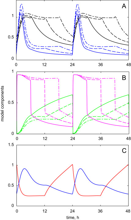 Simulated kinetics of the model components under various photoperiods. The simulations were initially run for 4 days under each photoperiod to entrain the system, so that only 5th and 6th days are shown. A, B: Solid, dashed and dashed-dotted lines correspond to 6 L:18 D, 12 L:12 D and 18 L:6 D light–dark cycles, respectively. Blue, black, green and magenta colors show the kinetics of HFR1, HY5 proteins and the activity of COP1 and CUL4 respectively. C: Simulated kinetics of the hypothetical COP1 (blue) and CUL4 (red) substrates under 12L:12D. HFR1 equation was used for COP1 substrate with the following parameter values: p5=0.28 h−1; h7=2 h−1. HY5 protein equation was used for CUL4 substrate with constant expression level p4 and the following parameter values: p4=0.22 h−1; h4=1 h−1; h5=0. The rest of the parameters are shown in Table 2 of the Appendix.
