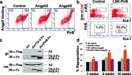 Angptls bind PirB and support the repopulation of mouse HSCsa, Flow cytometry analysis of FLAG-Angptl2 or GST-Angptl5-FLAG binding to PirB transfected 293T cells. b, Angptl2 binds to the extracellular domain of PirB but not Tie-2 in the conditioned medium of co-transfected 293T cells. c, PirB is expressed on mouse BM Lin−Sca-1+Kit+ cells. Isotype control on left. d, Competitive reconstitution of 8-day cultured progenies of input equivalent 250 Lin−Sca-1+Kit+CD34−Flk2− BM HSCs from WT or PirBTM donors (n = 5). SCF, TPO, and FGF-1, with or without Angptl2, were used in culture. * p < 0.05. Error bars, s.e.m.
