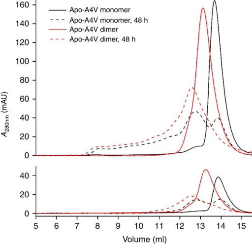 Aggregation of monomeric and dimeric apo-A4V SOD1.Apo-A4V monomer and dimer size-exclusion chromatography elution profile obtained before and after 48 h incubation at 37 °C. Upper panel shows protein at 100 μM and lower panel shows 25 μM. In each case, a single elution is measured by absorption at 280 nm.