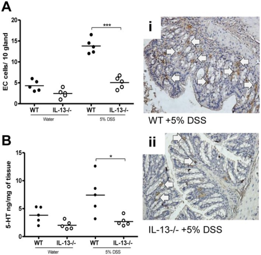 Effects of IL-13 deficiency in DSS-induced colitis.WT and IL-13−/− mice were given 5% DSS in drinking water to induce colitis. (A) Number of 5-HT expressing EC cells per 10 glands and colonic sections immunostained for 5-HT expressing EC cells after 5 days of DSS administration in WT and IL-13−/− mice. (B) Colonic 5-HT amount. (i) and (ii) Representative micrograph and arrows indicate 5-HT expressing EC cells. *Represents statistical significance where p<0.05.