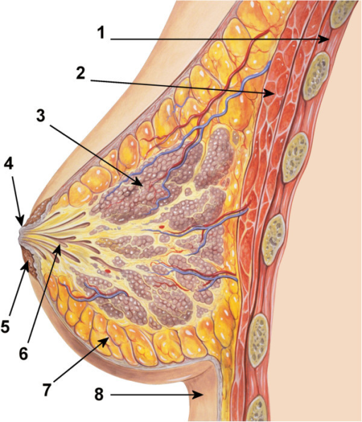 diagram of the ductal anatomy of the breast 1 chest open i rh openi nlm nih gov diagram of an aerial easement diagram of areola