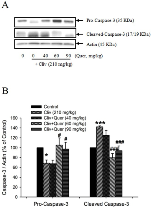 Quercetin inhibited clivorine-induced cleavage of caspase-3.(A) Protein expression of pro-caspase-3 (35 KDa) and cleaved caspase-3 (17/19 KDa) was determined by Western-blot analysis. The western blot figure represents one of at least three independent experiments with similar results. (B) The quantitative analysis of Western-blot results. Data were expressed as means ± SEM (n = 3 to 4). * P<0.05, *** P<0.001 compared with the control; # P<0.05, ### P<0.001 compared with clivorine.