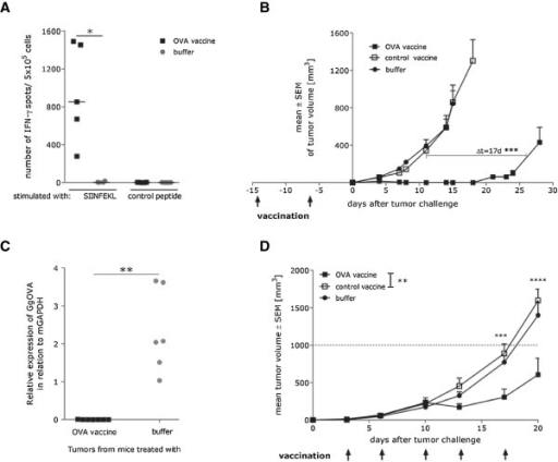 Efficacy of RNA immunotherapy is strongly dependent on the tumor burden and time available for the induction of immune response. (A) C57BL/6 mice (n = 5 per group) were vaccinated 2 times (1 vaccination/week) either with OVA mRNA vaccine (32 μg) or buffer. After 7 days splenocytes from vaccinated mice were analyzed for IFN-γ secretion in response to Ovalbumin- or Connexin-derived epitope using an ELISpot assay. * - p = 0.0154 (B) C57BL/6 mice (n = 8 per group) were vaccinated 2 times (1 vaccination/week) either with OVA mRNA vaccine (64 μg), control vaccine (64 μg) or buffer. 6 days after the second vaccination, mice were challenged subcutaneously with 1 × 106 syngenic E.G7-OVA tumor cells. Tumor growth was monitored by measuring the tumor size in 3 dimensions using calipers. *** - p < 0.0001 (C) Expression of Ovalbumin in tumors escaping the control of the immune system, following prophylactic vaccination, was analyzed. Total RNA was isolated and OVA expression was quantified via qRT-PCR in relation to mGAPDH. ** - p = 0.0034 (D) C57BL/6 mice (n = 8 per group) were challenged s.c. with 0.3 × 106 syngenic E.G7-OVA tumor cells on day 0. On day 3 mice were treated either with OVA vaccine (32 μg), control vaccine (32 μg) or buffer. Tumor growth was monitored by measuring the tumor size in 3 dimensions using calipers. ** - p = 0.0091, ***- p < 0.001, ****- p < 0.0001. All presented data show representative results of at least two independent experiments.