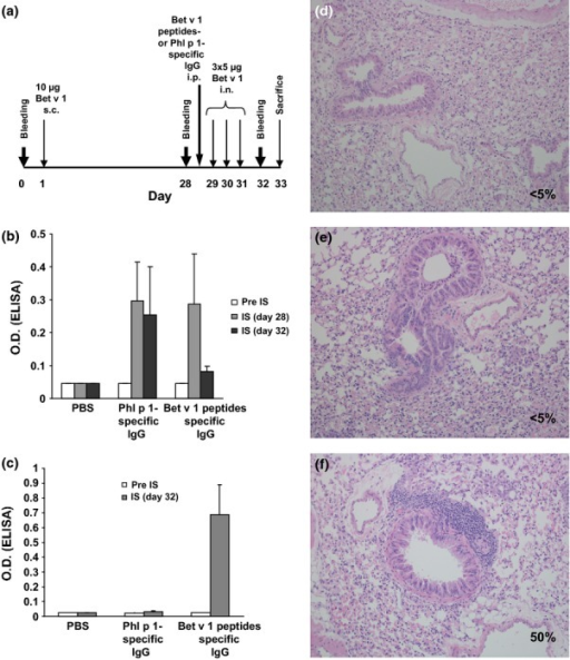 Adminstration of Bet v 1 peptide-specific antibodies prevents allergic lung inflammation. (a) Two groups of mice (n = 5) were sensitized with Bet v 1 and one group received PBS. One group of sensitized mice received Bet v 1 peptide-specific antibodies or Phl p 1-specific antibodies, and lung inflammation was induced by intranasal application of Bet v 1. (b) Mean OD values ± SD corresponding to Bet v 1-specific IgE levels (y-axis) are shown for the three mouse groups at different time points (x-axis). (c) Presence of Bet v 1-specific rabbit IgG antibodies in sera of the three groups of mice as in (b). H&E-stained lung sections from a representative mouse from the PBS group (d), the group treated with Bet v 1-peptide-specific antibodies (e), or with Phl p 1-specific antibodies (f). Percentages of infiltrated areas are shown in each section (d–f).