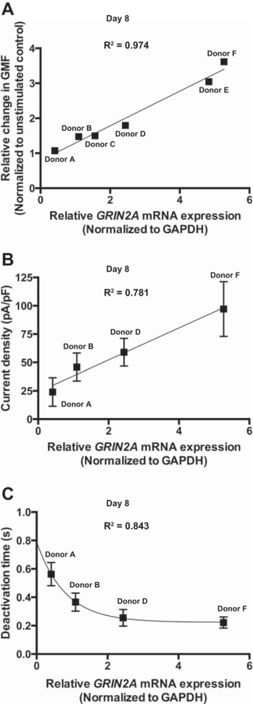 Donor dependence of Ca2+ influx, receptor properties, and GRIN2A expression during hematopoiesis. mRNA expression was normalized to GAPDH. A: correlation between GRIN2A mRNA expression and relative change in geometric mean fluorescence (GMF) in the stimulated EPCs. Correlation coefficient was calculated by the change in GMF triggered by the agonists and the relative mRNA expression from six donors. B: correlation of current density and relative GRIN2A mRNA expression (n = 4). C: correlation of deactivation time and relative GRIN2A mRNA expression from four donors. Data are means ± SD; linear (A and B) and exponential (C) functions were used for curve fitting.