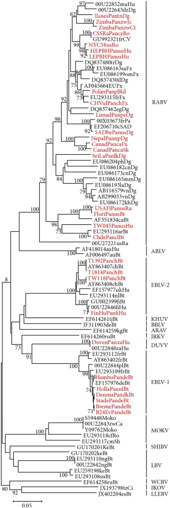 Phylogenetic tree with 543 bp fragments of N. Phylogenetic tree obtained with MEGA5 software [35]. The length of branches (horizontal lines) corresponds to phylogenetic distance between different sequences (scale bar in substitutions per site). Numbers proximal to nodes indicate bootstrap confidence of subjacent groups. Lyssavirus strains used in this study are depicted in red. Sequences are given with GenBank or own designation followed by the two-letter country code and a two-letter code for the source species as follows: Bt, bat; Ca, cat; Ci, African civet; Dg, dog; Fx, fox; Hu, human; Jc, jackal; Ra, raccoon; Rd, raccoon dog; Ro, rodent; Sh, shrew; Sk, skunk, except for Pa, cSAD, and CV, which are standing for Pasteur strain, Street Alabama Dufferin strain, and challenge virus standard, respectively. The currently used abbreviations for species are shown next to the tree. RABV, rabies virus; ABLV, Australian bat lyssavirus; WCBV, West Caucasian bat virus; IKOV, Ikoma virus; LLEBV, Lleida bat lyssavirus; MOKV, Mokola virus; SHIBV, Shimoni bat virus; LBV, Lagos bat virus; KHUV, Khujand virus; BBLV, Bokeloh bat lyssavirus; ARAV, Aravan virus; DUVV, Duvenhage virus; EBLV, European bat lyssavirus; IRKV, Irkut virus.