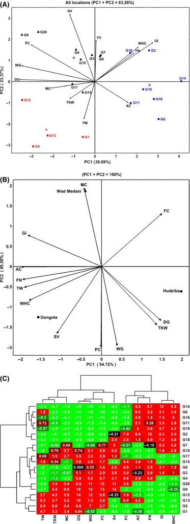 Biplot based on principal component analysis for grain quality traits in 20 wheat genotypes (G1–G20) grown in three different environments (Wad Medani, Hudeiba, and Dongola). The biplots showed the interrelations between the quality traits (A) and the environments (B). Bidimensional clustering analysis is presenting the relationships between the genotypes (C). TKW, Thousand kernel weight (g); TW, Test weight (kg/hL); AC, Ash content; FC, Fat content; PC, Protein content; FN, Falling number; WHC, Water holding capacity; GI, Gluten index; SV, Sedimentation value; WG, Wet gluten; DG, Dry gluten.