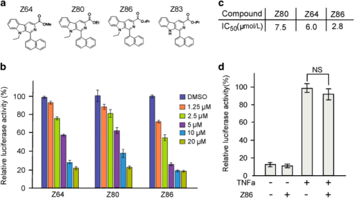 Identification of Z86 as a potent antagonist of Wnt signaling. (a) Structures of the β-carboline compounds. (b) Effects of Z64, Z80 and Z86 on the Topflash reporter activity. The HEK293W cells were treated with different doses of Z64, Z80 and Z86 respectively for 24 h. Relative luciferase activity (Topflash/Renilla) measured represents the level of activated Wnt signaling. (c) The calculated IC50 values of Wnt signaling inhibition of the compounds are displayed in the table. (d) Z86 preferentially inhibits Wnt signaling (ST-Luc) over the NF-κB signaling pathway. NF-κB signaling was stimulated with 25 ng/ml TNFα treatment for 24 h in HEK293T cells that were subsequently treated with Z86 (20 μM) for 24 h and the NF-κB-Luc luciferase activity was measured. Each bar is the mean±S.D. from three independent experiments. NS, not significant, relative to the vehicle control.