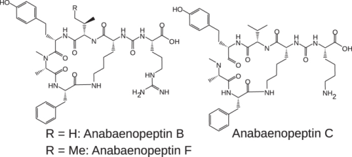 Structural formulae of the anabaenopeptins B, C, and F.