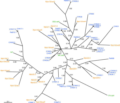 Phylogenetic Relationship between Different VAR2CSA DBL3X SequencesBayesian inference tree of 43 placental cDNA sequences from Senegal (blue), 21 Malawian sequences (orange), and database sequences from four isolates (green) of different geographic origin. The posterior probability of the clades is shown at the branches.