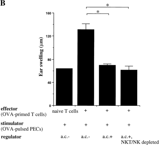 Analysis of NKT and NK cells as efferent regulatory DTH cells in the LAT assay. (A) Flow cytometry confirmation of NKT and NK cell depletion in vitro. Column-enriched splenic T cells were harvested from B6 mice 7 d after OVA (ac) inoculation. All NK1.1+ cells were removed from the T cell–enriched populations with a magnetic field after treatment with a mixture of FITC–anti-NK1.1, biotin–anti-Ly49C mAbs, and anti–pan-NK cell conjugated Microbeads, and anti-FITC and streptavidin MicroBeads. CyChrome 5–conjugated anti–TCR β chain and FITC-conjugated anti-NK1.1 cells are shown in the dot plots for cells before and after treatment. The percentage of labeled cells is shown next to the square and rectangle for NKT and NK cells, respectively. (B) The effect of NKT and NK cell depletion on efferent regulation of DTH. Ear swelling was measured 24 h after cell transfer of the various cell mixtures (indicated below the abscissa for each bar) into the ear pinnae of naive syngeneic mice (five per group), and is shown on the ordinate. Significant differences (P ≤ 0.05) are indicated by an asterisk.