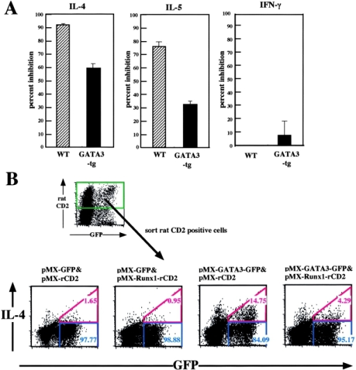 Effect of cotransduction of GATA3 and Runx1 on Th2 cell differentiation. (A) Naive CD4+ T cells were isolated from the spleens of wild-type and GATA3-transgenic mice, TCR-stimulated, infected by retroviruses carrying pMX or pMX-Runx1, and cultured in the presence of IL-2. The GFP+ population was sorted and reactivated via TCR. The cytokines secreted into the culture supernatant were measured by ELISA. The values obtained for the pMX-Runx1–infected cells are presented as percent inhibition of secretion, taking the values observed for the pMX-infected cells to be 100%. (B) Naive CD4+ T cells were isolated from the spleens of IL-4R (−/−) mice, TCR-stimulated, coinfected by pMX-GFP and pMX-rat CD2 retroviruses as indicated, and cultured in the presence of IL-2. The rat CD2+ population was sorted, TCR-stimulated, and processed for flow cytometrical analysis of intracellular IL-4. Data are representative of two independent experiments.