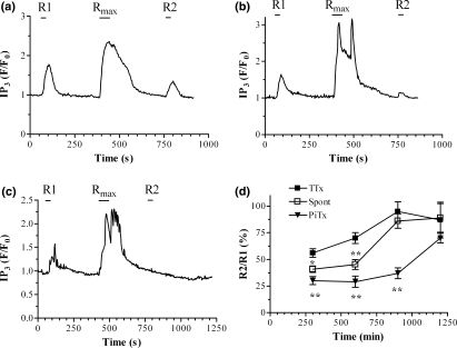 Effects of synaptic activity on M1 muscarinic acetylcholine (mACh) receptor responsiveness and re-sensitization assessed through inositol 1,4,5-trisphosphate (IP3) imaging of hippocampal neurons. The desensitization protocol (R1/Rmax/R2) was performed as described in the Experimental Procedures section. Representative traces showing M1 mACh receptor desensitization in the presence of (a) tetrodotoxin (TTx) (500 nmol/L); (b) no pre-addition (spontaneous synaptic activity; Spont in panel d); and (c) synaptic activity induced by picrotoxin (PiTx, 100 μmol/L). Picrotoxin was present 3 min prior to and throughout the experiment. Methacholine (R1, 10 μmol/L, 30 s; Rmax, 100 μmol/L, 60 s; R2 10 μmol/L, 30 s) was added as indicated by the bars. (d) Cumulative data for time-courses of M1 mACh receptor re-sensitization in the absence (Spont) or presence of TTx, or following PiTx addition. Data are expressed as means ± SEM for the percentage change in R2 relative to the R1 response, for 5–15 neurons taken from at least three separate hippocampal preparations. Significant differences in the R2/R1 ratio from the +TTx condition at a given time-point are indicated as *p< 0.05; **p< 0.01.