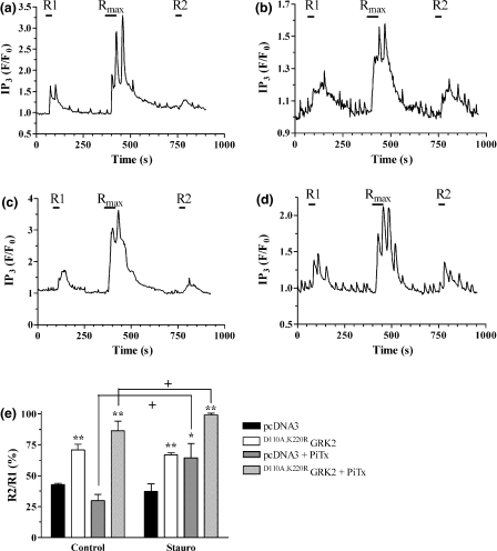 Effects of manipulating protein kinase C activity in hippocampal neurons on M1 muscarinic acetylcholine receptor responsiveness. Neurons were co-transfected with PH domain of PLCδ tagged to enhanced green fluorescent protein and empty vector (pcDNA3) or D110A,K220RG protein-coupled receptor kinase (GRK) 2 and changes in receptor responsiveness determined using the standard R1/Rmax/R2 protocol (see Experimental Procedures). Neurons were pre-incubated with either vehicle (Control) or staurosporine (1 μmol/L; Stauro) for 15 min prior to, and throughout the experiment. Representative traces are shown for neurons treated with picrotoxin (PiTx, 100 μmol/L) in the presence of (a) pcDNA3 and vehicle; (b) D110A,K220RGRK2 and vehicle; (c) pcDNA3 + staurosporine (1 μmol/L); (d) D110A,K220RGRK2 and staurosporine (1 μmol/L). (e) cumulative data are shown for either spontaneously active or picrotoxin-treated neurons and are expressed as means ± SEM for the percentage change in R2 relative to the R1 response, for ≥ 5 neurons per treatment taken from at least three separate hippocampal preparations. Significant differences in the R2/R1 ratio caused by either D110A,K220RGRK2 expression are indicated as *p< 0.05; **p< 0.01, while a significant effect of staurosporine pre-treatment is shown as +p< 0.05.