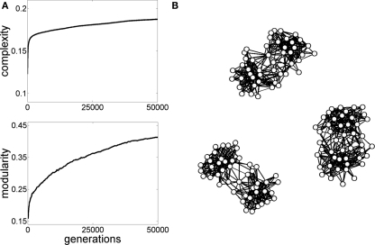 "Graph evolution for neural complexity. The initial population of graphs in generation 1 consisted of 10 randomized graphs similar to the ones shown in Figure 3B, with 47 nodes and 505 edges. Simple linear dynamics (Galán, 2008) was run on these graphs and the graph generating the highest neural complexity (Tononi et al., 1994) was selected and copied forward to the next generation, as described in Sporns et al. (2000). Then, small random ""mutations"" were introduced in the graph's ""offspring"" and the process of selecting for complex dynamics was continued for a total of 50,000 generations. (A) Plots show the increase in complexity and a parallel increase in modularity. (B) Examples of graphs obtained at the end of the simulations exhibit non-random topologies, including higSh modularity and hub nodes."