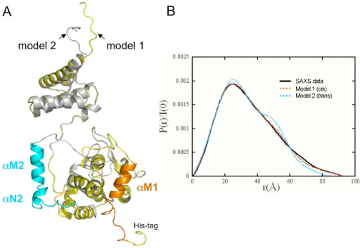 Helices αM and αN pack in cis.A. Superimposition of the two models constructed from the XerA monomer structure. Model 1 (yellow): cis positioning of αMN helices. Model 2 (grey): trans positioning of αMN helices. The two possible positions for αMN helices according to each model are in orange and blue respectively. B. Distance distribution functions P(r). Black line: experimental curve. Orange dotted curve: XerA monomer with αMN helices packed in cis. Blue dotted curve: XerA monomer with αMN helices packed in trans.