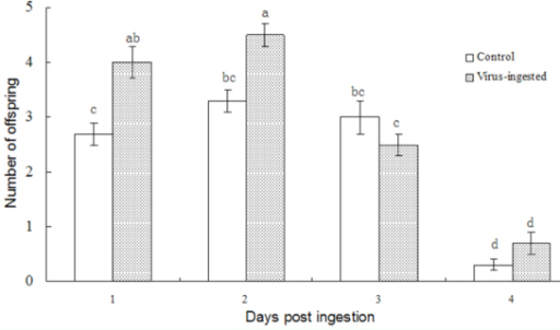 Number of offspring that successfully emerged from the host, produced by Meteorus pulchricornis fed a honey solution containing the virus. Each column represents the average of results from three bioassays using 6 parasitoids per bioassay. High quality figures are available online.