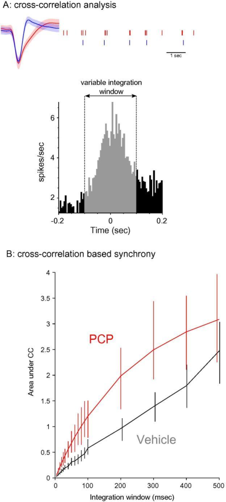 Spike cross-correlations reveal abnormal prefrontal synchrony in PCP-treated animals. (A) Illustration of the cross-correlation-based analysis from two mPFC units recorded simultaneously; area under the cross-correlation was integrated over windows of varying length and plotted in (B). Spike waveform error bands represent SD. (B) Cross-correlogram-based synchrony was significantly higher in PCP-treated animals for a range of integration windows. Error bars represent a 95% bootstrapped confidence interval.