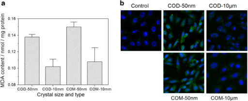 MDA release amount and OPN expression after treatment with 200 μg/ml nano-/micron-sized COM and COD crystals for 6 h. (a) MDA release amount in Vero cells after treatment by COM and COD crystals. (b) OPN expression observation by fluorescence staining.