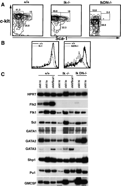 Analysis of lin− Ikaros mutant hemopoietic cells. (A) Total BM cells from 2–4 wk-old wild-type (+/+), Ikaros  (Ik −/−), and Ikaros (Ik) DN−/− mice were lineage depleted and stained for c-kit and Sca-1 (as described in Materials and Methods). The c-kithi, c-kitlo, and c-kit+Sca-1+ populations are boxed and percentages are indicated. (B) Histograms of cell surface c-kit expression in Ikaros mutant lin− BM populations (dashed lines) and wild type (solid lines) are shown. The left and right panels contrast Ikaros  and Ikaros DN−/− cells, respectively, with wild-type cells. (C) RT-PCR analysis of sorted hemopoietic cells from wild-type and Ikaros mutant mice. BM cells were lineage depleted and sorted according to expression of c-kit and Sca-1, as indicated in A. cDNA was obtained from each sorted population and PCR amplified for the indicated genes. cDNA levels were normalized to HPRT levels.