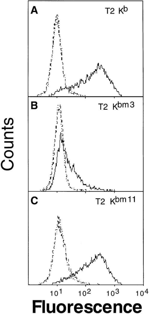 Soluble divalent 2C  TCR–Ig detects SIY–MHC complexes, but not dEV-8–MHC  complexes. T2 cells transfected  with either H-2 Kb, H-2 Kbm3,  or H-2 Kbm11 were incubated  overnight at 27°C and loaded  with peptides dEV-8 (broken  line), SIY (solid line), or pVSV  (dotted line) as described in Materials and Methods. Cells were  stained with purified 2C TCR– Ig (∼50 μg/ml) and GAM-IgG-RPE as described in Materials  and Methods, and analyzed by  FACS®. Resultant histograms are  shown; (A), T2-Kb cells, (B) T2-Kbm3, (C), T2-Kbm11. In the histograms presented 2C TCR–Ig  reactivity with either dEV-8 (broken line) or pVSV (dotted line) was  virtually identical leading to difficulty in discriminating between  these two histograms.