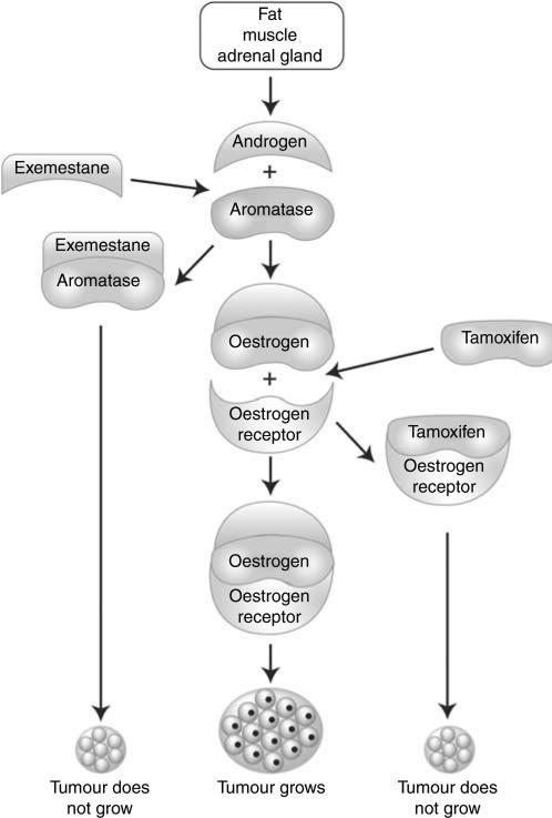 osteobiologics and pharmacologic agents in fracture healing essay A variety of pharmacological agents affect skeletal repair more  schematic  summary of the stages of fracture repair and their associated molecular  processes.