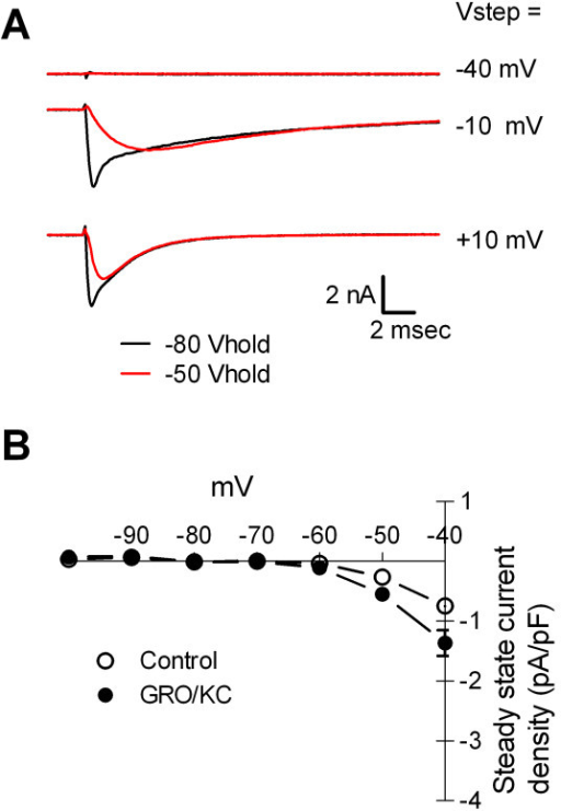 GRO/KC incubated cells have Na+ currents that are qualitatively similar to those seen in control cells. A. Examples of current traces elicited from holding potential of -80 mV (darker, smaller traces) or -50 mV. As in control cells, the currents elicited from -80 mV have a faster component, which is TTX-sensitive (see text). B. Persistent Na+ currents activating at -60 to -50 mV were not observed. Average leak-subtracted steady state current is plotted against the step potential. Holding potential was -80 mV.