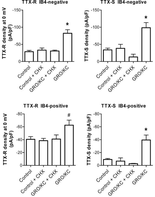 Effect of the protein synthesis inhibitor cycloheximide (CHX) on enhancement of Na+ currents by GRO/KC incubation. Cycloheximide (3.5 μM) or vehicle (DMSO) was added to cell cultures just before addition of 1.5 nM GRO/KC or vehicle, and TTX-S and TTX-R Na currents were measured 16 to 30 hours later. *, significantly different from all other groups; #, significantly different from control (one-way ANOVA followed by Tukey's multiple comparison test). Data are from 1 set of experiments (3 cultures) comparing 22 control and 29 CHX treated cells, and a second set of experiments (2 cultures) comparing 14 GRO/KC treated cells with 22 GRO/KC + CHX treated cells. Additional data, from Figure 1, are included in the control and GRO/KC data groups. Analysis omitting this additional data gave similar results, except that the TTX-R current in IB4-positive cells showed no significant differences between groups.