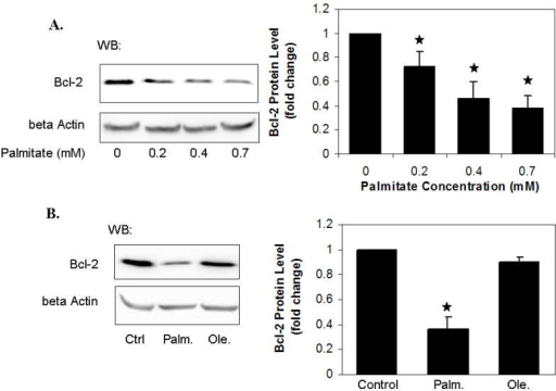 Effects of palmitate and oleate on the protein level of Bcl-2HepG2 cells were cultured in regular media until reaching 90% confluency, and then exposed to different levels of palmitate (A), 0.7 mM palmitate or 0.7 mM oleate (B) for 24 hours. The vehicle for the FFAs (0.7 mM BSA) was used as the control (i.e., regular media with BSA), in which the concentration of FFAs was 0 (A, B). After treatment, the cells were harvested, and western blot analysis was performed to detect the protein level of Bcl-2. Quantified Bcl-2 protein level by normalizing to beta actin levels and expressed as average of three samples ± SD from three independent experiments. One-way ANOVA with Tukey's post hoc method was used for analyzing the differences between treatment groups. ★, significantly lower than control, i.e., regular media with BSA, p<0.01.