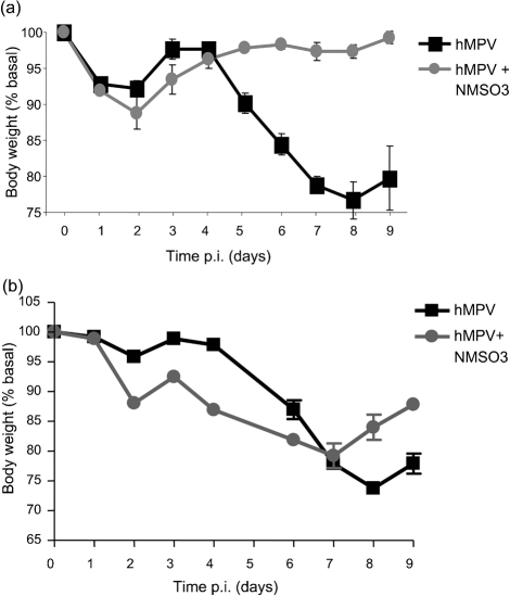 Effect of NMSO3 administration on hMPV-induced body weight loss. Mice were treated with 50 mg NMSO3 kg−1 at the time of hMPV infection (a) or at 24 h p.i. (b). The results show a representative diagram from three different experiments. All data points represent the means±sd of four to five animals.