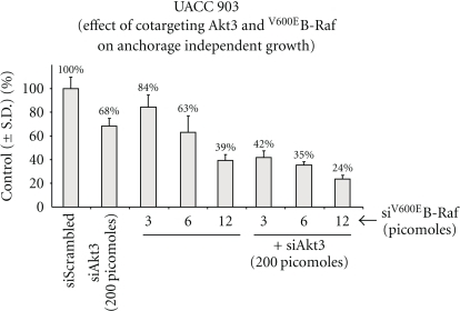 Cotargeting Akt3 and V600EB-Raf inhibits melanoma cell proliferation in vitro.  Two hundred picomoles of siRNA targeting Akt3 and increasing (3, 6, and 12 picomoles) amounts of siRNA inhibiting V600EB-Raf were introduced alone or in combination into UACC 903 melanoma cell line by Amaxa transfection and effect on anchorage independent growth ability measured using MTS assay.  The data shows a dose-dependent inhibition of cell viability when Akt3 and V600EB-Raf were inhibited.  However, maximal effect was observed only when Akt3 and V600EB-Raf targeted together, indicating the necessity of inhibiting multiple signaling cascades    [46, 151].