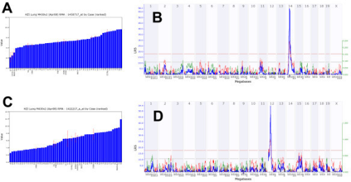 Examples for variations of expression levels in different BXD and inbred mouse strains and ge-nome-wide analysis of cis- and trans-eQTLs. (A) Log2 expression levels for Ang1 and (B) corresponding cis-eQTL signal. The numbers at the top are chromosomes. The blue line represents the significance level of the QTL expressed as LRS score (likelihood ratio statistic). A positive additive coefficient (green line) indicates that DBA/2J alleles increased trait values. A negative additive coefficient (red line) indicates that C57BL/6J alleles increased trait values. The two horizontal lines mark the genome-wide significance levels at p < 0.05 (red line) and p < 0.63 (gray line). Ang1 is located on Chr 14 (triangle) and the QTL peak is at the same location as the gene. (C) Log2 expression levels for Cyp1a1 and (D) corresponding trans eQTL peak. Cyp1a1 is on chromosome 9 (triangle) and the QTL was found on chromosome 12.