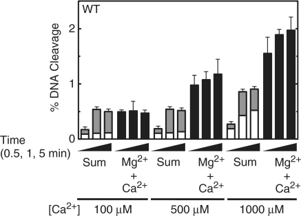 Topoisomerase IV-mediated cleavage of the wild-type (WT) oligonucleotide in the presence of different divalent metal ions. Cleavage reactions were carried out for 0.5, 1 or 5 min in the presence of 10 mM Mg2+ alone (open bars), 100–1000 µM Ca2+ alone (gray bars) or a mixture of 10 mM Mg2+ and 100–1000 µM Ca2+ (black bars). The calculated sum of cleavage in the presence of Mg2+ or Ca2+ alone is shown (stacked open and gray bars). Error bars represent the standard deviation of three independent experiments.