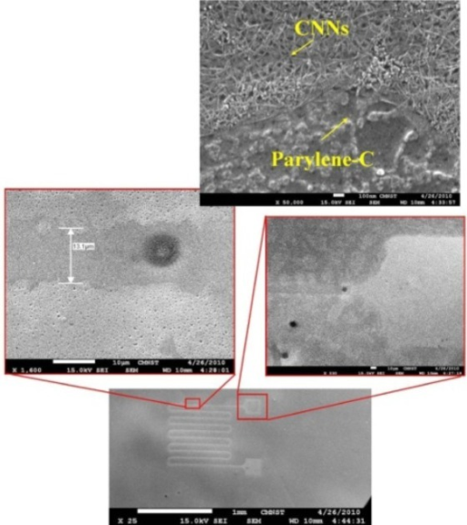 Nanocarbon network and SEM images of Parylene-C.