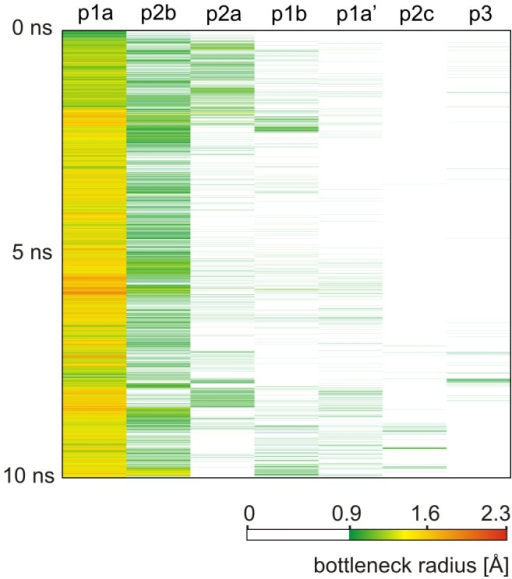 Time evolution of the bottleneck radii of DhaA tunnels identified by CAVER 3.0.The color map ranges from very narrow (green) to wide (red) bottlenecks. White color indicates that no pathway with bottleneck radius ≥0.9 Å was identified for the given pathway cluster in the given snapshot.