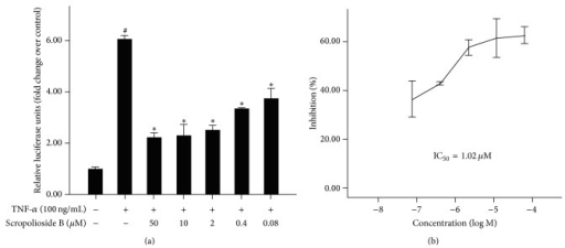 Scropolioside B inhibited TNF-α-induced NF-κB activation. Cells were preincubated for 1 hour with different doses of scropolioside B and then stimulated with 1 μg/mL TNF-α for 16 hours. The results shown are representative of 3 separate experiments. Data are expressed as means ± SD. #P < 0.05 versus the control, *P < 0.05 versus the TNF-α (a). IC50 values of 1.02 μmol/L (b).