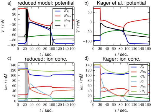 Time series.Time series for single SD excursions in (a), (c) the reduced and in (b), (d) the detailed model. In the reduced model SD is triggered by an interruption of the pump activity for about 10 sec (shaded region). In the detailed model the extracellular potassium concentration is increased by  mM after 20 sec (vertical line). In (a) and (b) the time series of the membrane potentials (black lines) are shown. Nernst potentials for all ion species are included to the diagrams as a reference. Ion dynamics are shown in (c) and (d) where extracellular ion concentrations are in lighter color.