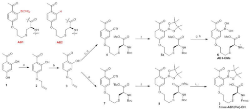 Synthesis of AB1 and its derivatives(a) Allyl bromide, K2CO3, NaI, acetone, 81%. (b) (CF3SO2)2O, Et3N, DCM, 95%. (c) Cys-OMe, DMPA, MeOH, ~365 nm UV irradiation. (d) Boc anhydride, Na2CO3, THF/H2O, 80% over two steps. (e) Boc-Cys-OtBu, DMPA, MeOH, ~365 nm UV irradiation, 75%. (f) Pd(dppf)Cl2/dppf, B2Pin2, KOAc, dioxane, ~70–80%. (g) 40% TFA in DCM. (h) diethanolamine, 1N HCl, 74% over two steps. (i) 60% TFA in DCM. (j) Fmoc-OSu, Na2CO3, THF/H2O, 81% over two steps.