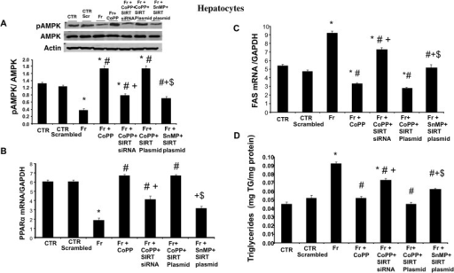 Effect of CoPP with and without SIRT1-siRNA, and with and without SIRT plasmid on pAMPK, PPARα, FAS expression and triglyceride levels in fructose (Fr)-treated hepatocytes.(A) pAMPK/AMPK expression by western blot analysis. (B) PPARα mRNA levels. (C) FAS mRNA levels measured by RT-PCR in hepatocytes. Results are mean±SE, n = 4/group. * p<0.05 vs CTR; # p<0.05 vs HFr, + p<0.05 vs HFr+CoPP, $ vs Fr+CoPP+SIRT Plasmid. (D) Triglyceride levels measured by RT-PCR in hepatocytes. Results are mean±SE, n = 4/group. * p<0.05 vs CTR; # p<0.05 vs HFr, + p<0.05 vs HFr+CoPP, $ vs Fr+CoPP+SIRT Plasmid.