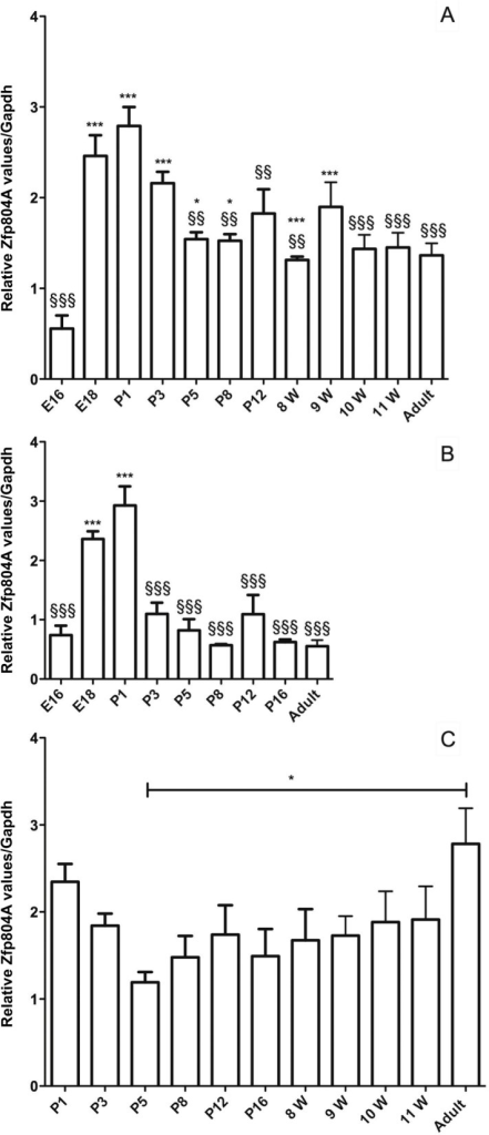 Zfp804A mRNA expression in the developing rat brain.(A) Relative Zfp804A mRNA expression in the frontal part of the rat cortex. Zfp804A expression is significantly increased at E18, P1 and P3 compared to the levels at E16 (***P<0.001) and after P3 the level decreases significantly compared to P1 (§§P<0.01, §§§P<0.001). (B) Relative Zfp804A expression in the rat cerebellum. The expression of Zfp804A is significantly higher at E18 and P1 compared to E16 (***P<0.001) and lower at all time points compared to P1 (§§§P<0.001) except for E18. (C) Relative Zfp804A expression within the rat hippocampus. Expression is significantly increased in the adult rat compared to P5 (*P<0.05). The zfp804A primer set was used and data are presented as means ± SEM. Gapdh was used as a reference gene and n ≥ 4