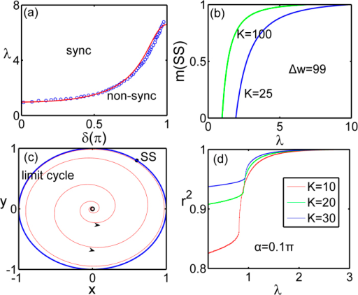 (a) Synchronization boundary line Eq. (18) with the initial distribution of phase are randomly drawn from interval [−δ,δ]. (b) The measure of the synchronous state against the coupling strength for different K. (c) The ensemble order parameter phase space for 0 < α ≤ 0.5π, the limit cycle corresponding to the splay state, and the fixed point corresponding to the synchronous state (SS). (d) The order parameter against the corresponding coupling strength with different sizes.