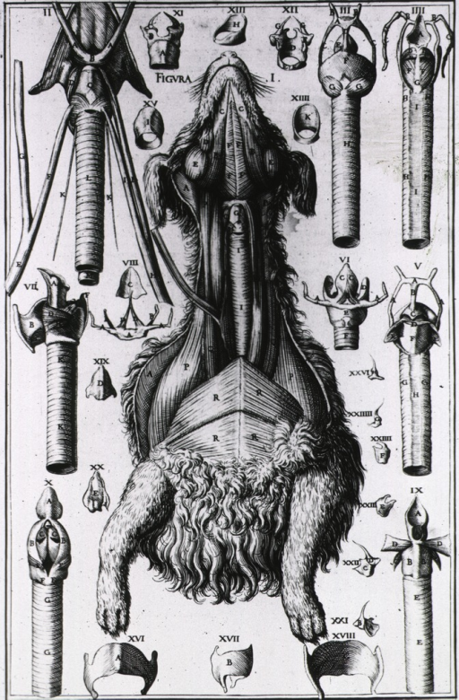 <p>A dog with throat dissected, plus several anatomical views of the speech organs.</p>
