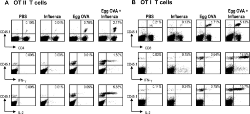 Coadministration of OVA and influenza virus leads to formation of OVA specific cytokine producing effector cells. B6 mice were injected with 106 OT-I or OT-II T cells intravenously on day 0. Day 1 mice were infected with X-31 or mock infected and administered egg OVA on day 2, 3, and 4. On day 6 the draining lymph nodes were harvested and 5 × 106 cells were cultured for 5 h with SIINFEKL (OT-I) or OVA323–339 (OT-II) in the presence of Brefeldin A. After harvesting, the cells were stained for expression of CD45.1 and CD4/CD8 and intracellular IL-2 or IFN-γ. The response of OT-II T cells (A) and OT-I T cells (B) is shown for cell numbers (top rows) and IFN-γ/IL-2 production (middle and lower rows) in the mediastinal LNs. Data are representative of two experiments.