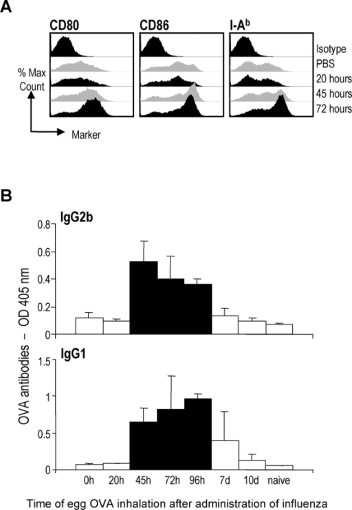Influenza virus induced DCs maturation correlates with production of OVA-specific antibodies. (A) Six B6 mice/group were infected with X-31 or mock infected and CD11c+ cells were purified from the draining LNs 20, 45 and 72 h after infection and stained for expression of CD80, CD86, and MHC II. (B) Four mice/group were infected with X-31 at time point 0. At various time points post virus infection (0, 20, 45, 72, 96 h, 7 d, and 10 d), the mice received a single dose of egg OVA. 22 d after virus infection, the serum was analyzed for OVA-specific IgG1 and IgG2b antibodies. All the black bars are significantly different from the white bars (P < 0.05) except for day 7 in the IgG1 chart. Data are expressed as mean ± SD and shown at 1:10 serum dilutions. Data are representative of three experiments.