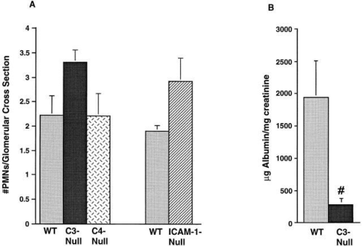 Glomerular PMN accumulation in mice deficient in ICAM-1  and complement C3 or C4 (A), and proteinuria in C3-deficient mice (B).  Anti-GBM nephritis was induced in the aforementioned mice and their  wild-type counterparts, and glomerular PMN accumulation was determined 2 h after the induction of nephritis. The number of PMNs per  glomerular cross-section was not significantly different between any group  of animals and their controls. Proteinuria was examined in C3-deficient  mice and their wild-type counterparts 8 h after induction of nephritis.  C3- mice had significantly less proteinuria than wild-types. n = 4 for  each set of wild-type and complement knockout mice. n = 6 for wild-type and ICAM-1– mice. #P <0.05.