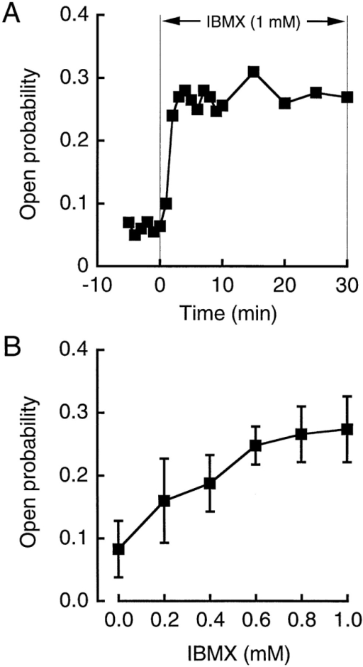 The open  probability (Po) of the  IBMX (1 mM)-activated  channel. (A) A typical  time course of IBMX-induced change in Po  obtained from a cell- attached patch. Similar  time courses could be  obtained in three more  individual cell-attached  patches. (B) Effects of  IBMX of different concentrations on Po. The  pipette potential was 0  mV. n = 4–11.
