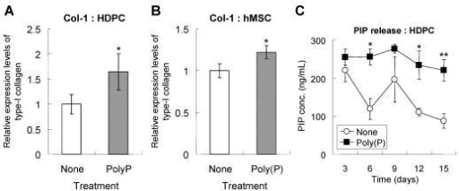 Production and maturation of type I collagen. Type-I collagen expression in HDPCs (A) and hMSCs (B). Cells were treated with or without poly(P) for 5 days, and the expression of type-I collagen was detected by immunostaining as described in Materials and Methods. Open bars, relative expression level of type-I collagen in non-treated cells; gray bars, level in 1 mM poly(P)-treated cells. Significant differences between the values of the poly(P)-treated group [Poly(P)] and the control group (None) were determined by Student's t test. Asterisk (*), p <0.01 to the control (none). (C) Expression levels of PIP in cell culture supernatants. The concentration of PIP released from HDPCs was determined by ELISA. Open circles, PIP released from cells that were not subjected to any treatment; closed squares, PIP released fromcells that were treated with 1 mM poly(P). Each value is the average ± SD of three independent experiments. Significant differences between two values (Poly(P) and None) at the same time point were determined by Student's t test. Asterisk (*), p <0.01 to control (none). Double asterisk (**), p <0.05 to control (none).