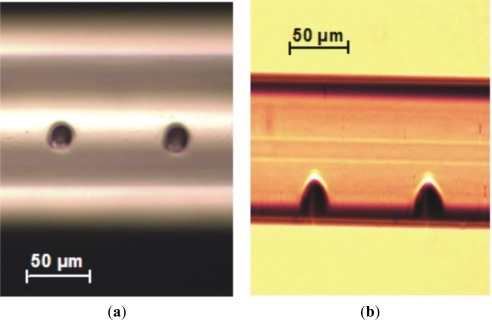 Example of two holes opened on the lateral side of a Corning SMF-28 fiber by multiple-pulse irradiation with a focused NIR laser beam. (a) Front and (b) lateral views taken with an optical microscope. (20 pulses with 3 mJ/pulse).