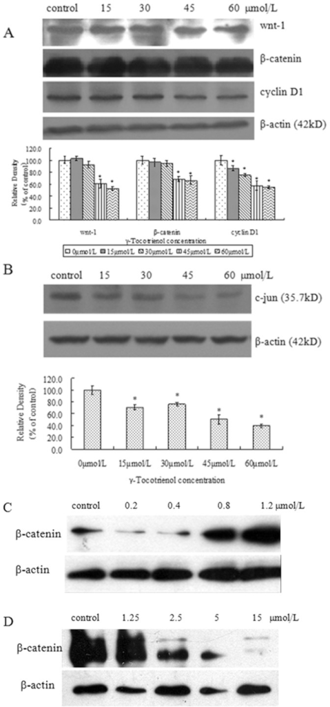 The protein expressions of Wnt-1, β-catenin, c-jun, cyclin D1 and β-actin in SW620 cells.The cells treated with 15, 30, 45 and 60 µmol/L of γ-tocotrienol (A and B), or PTX at 0.2, 0.4, 0.8 and 1.2 µmol/L (C), or FH535 at 1.25, 2.5, 5 and 15 µmol/L for 24 h (D). *P<0.05, compared to the negative control group.