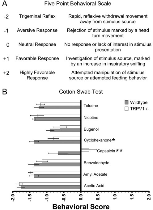 TRPV1 knockout mice are significantly less averse to capsaicin and cyclohexanone than wildtype mice in an acute presentation.(A) A five-point scale ranging from -2 for a trigeminal reflex to +2 for a highly favorable response was used to assign behavioral scores for each substance. (B) Mean ± SEM behavioral score for wildtype mice (n=7), filled bars, and TRPV1-/- knockout mice (n=7), unfilled bars. Two-way ANOVA revealed a significant difference among irritants (P<0.001), genotype (P<0.01) and a significant interaction between irritant and genotype (P<0.05). Knockout mice had a significantly more favorable response to capsaicin (P<0.01) and cyclohexanone (P<0.05) than wildtype mice. *P<0.05, **P<0.01, ***P<0.001.
